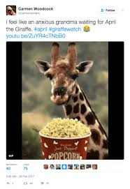 Giraffe Meme - april the giraffe internet reactions newsday