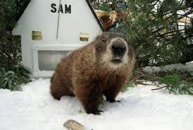 two out of three groundhogs predict six more weeks of winter