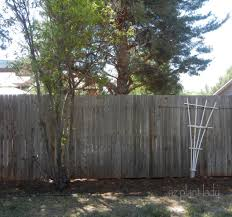 creative tips for dressing up a bare fence with plants birds and