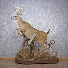 amazing deer taxidermy deer taxidermy life size mount m1 12510