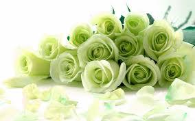 green roses green roses chrome web store