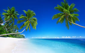 wallpaper biru hijau wallpaper pantai pantai laut biru hijau sawit pemandangan hd