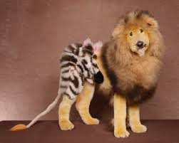 different styles of hair cuts for poodles disfraces caninos crazy poodle lions and dog