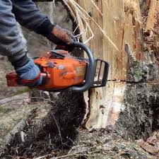 jacksonville tree service company robert s