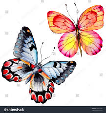 butterfly insect watercolor style stock illustration