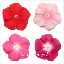 Vinca Flowers Compare Prices On Vinca Flowers Perennial Online Shopping Buy Low