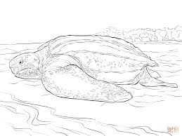 realistic leatherback turtle coloring page free printable