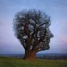 tree face face or a tree illusion optical illusion
