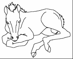 wonderful baby horse coloring pages for kids with printable horse