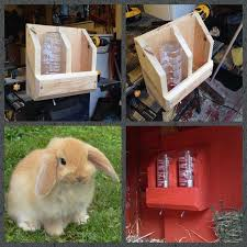 Cool Pets Rabbit Hutch Best 25 Picture Of A Rabbit Ideas On Pinterest Baby Bunnies