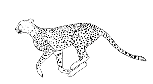 african wild animal cheetah coloring pages womanmate com