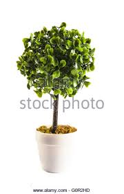 artificial tree stock photos artificial tree stock images alamy
