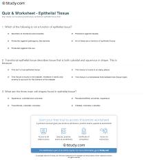 Human Anatomy Worksheet New Human Anatomy Preeminent Anatomy Tissue Quiz At Best Anatomy Learn