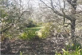 Kyneton Botanical Gardens Open Gardens Kyneton Daffodil Arts Festival