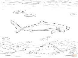 crocodile shark coloring page free printable coloring pages