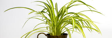 Best Plants For Bedroom The Best Plants For Your Bedroom Racq Living