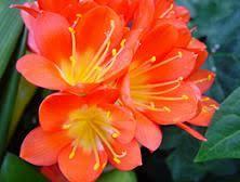 orange and color the color orange