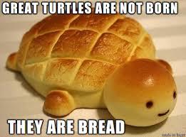 Turtle Meme - punny turtle meme on imgur