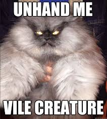 Colonel Meow Memes - 217 best colonel meow images on pinterest angry cat cats