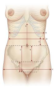 Female Abdominal Anatomy Pictures Abdominoplasty Procedures Plastic Surgery Key