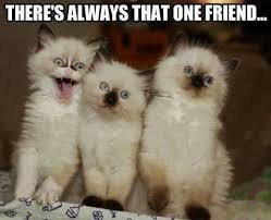 Crazy Friends Meme - 1115 best funny stuff images on pinterest funny animals animals