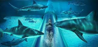 mayan temple shark lagoon atlantis resort u0026 casino nassau bahamas