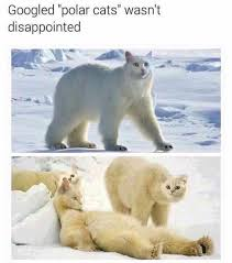White Cat Meme - quality content memebase funny memes