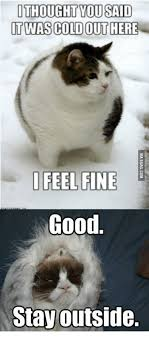 25 Best Memes About Grumpy - 25 best memes about grumpy cat what the hell is that grumpy