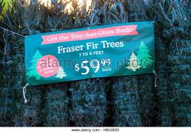 fresh christmas trees stock photos u0026 fresh christmas trees stock