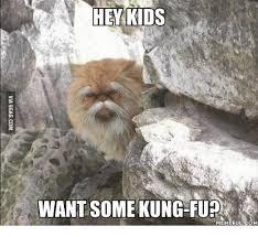 Meme Kung Fu - 25 best memes about kung fu meme kung fu memes