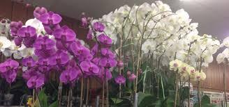 Send Flowers San Antonio - home