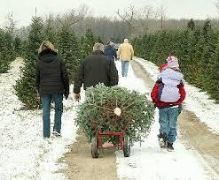 Christmas Tree Farm Va - christmas tree farm leesburg va rainforest islands ferry