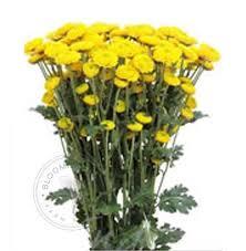 bulk flowers buy fresh wholesale bulk flowers bloomingmore