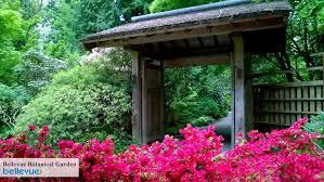 Bellevue Botanical Garden Lights Bellevue Botanical Garden Bellevue Attractions Events