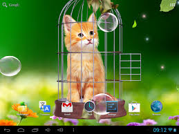 cute scarecrow wallpaper cat and hummingbirds wallpaper android apps on google play