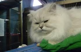 cats 1 photo leah levieva sawyer e1353277963646 jpg
