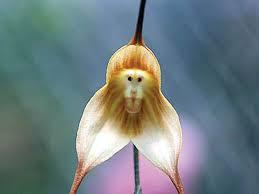 monkey flowers monkey flowers wallpapers hd wallpapers