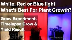 what color light do plants grow best in white red or blue light for growing the best colour for plant