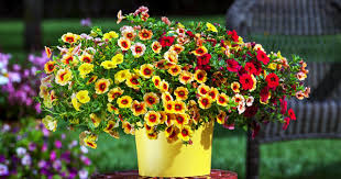download summer flower plants solidaria garden