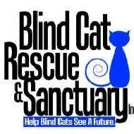 Blind Cat Sanctuary Blind Cat Rescue U0026 Sanctuary U003d Cat Rescue Blindcatrescue On