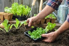 Vegetable Garden Blogs by Grow Your Own Salad Garden Sheridan Nursuries Blog