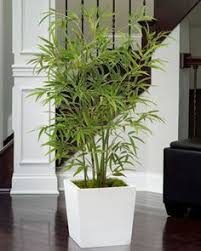buy spathiphyllum silk floor plant at petals for the home