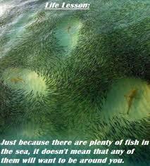 Fish In The Sea Meme - there are plenty of fish in the sea meme xyz