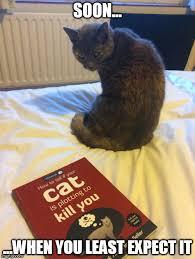 Soon Cat Meme - evil masterplan imgflip