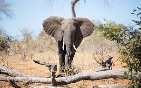 best safari for elephants travel leisure