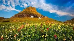 Montana travel definition images Springtime tag wallpapers park tulips sunny springtime flowers jpg