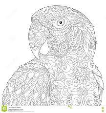 zentangle stylized macaw stock vector image 78280944