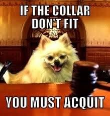 Lawyer Dog Meme - another lawyer dog meme starring our office mascot sugar bear yelp