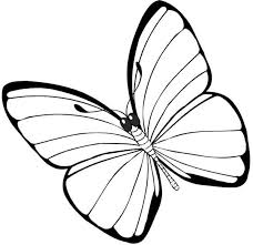 simple and none pattern butterfly coloring page print