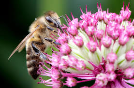 plants that keep bees away simplemost
